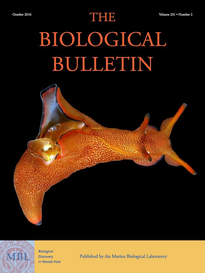 The Biological Bulletin